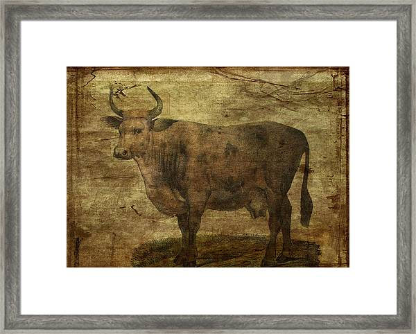 Take The Cow By The Horns Framed Print