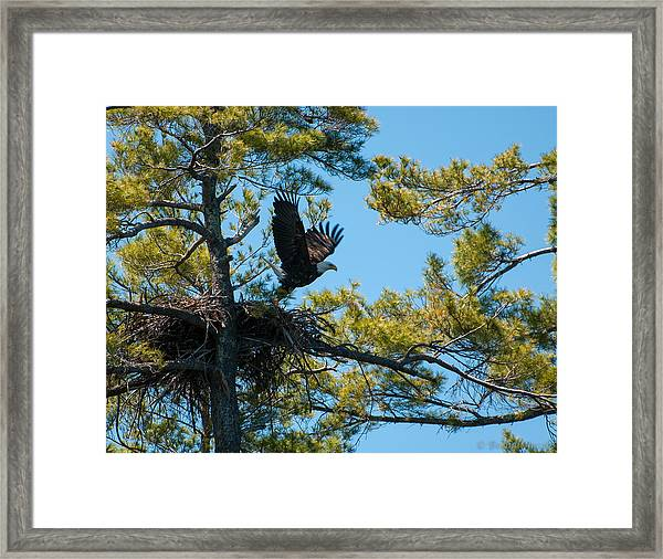 Taking Flight Framed Print