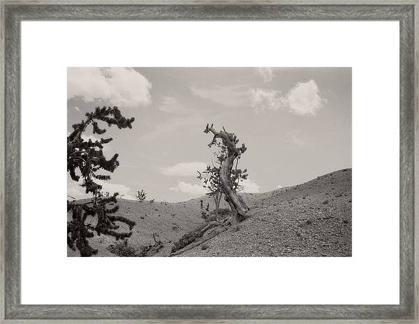 Talking Trees In Bryce Canyon Framed Print