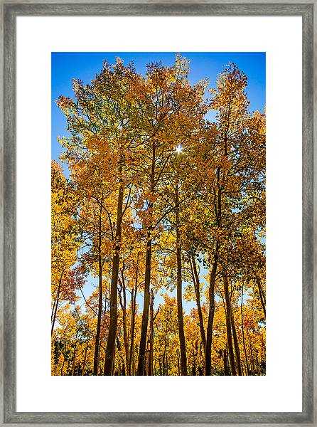 Tall Aspen With Sunstar Framed Print