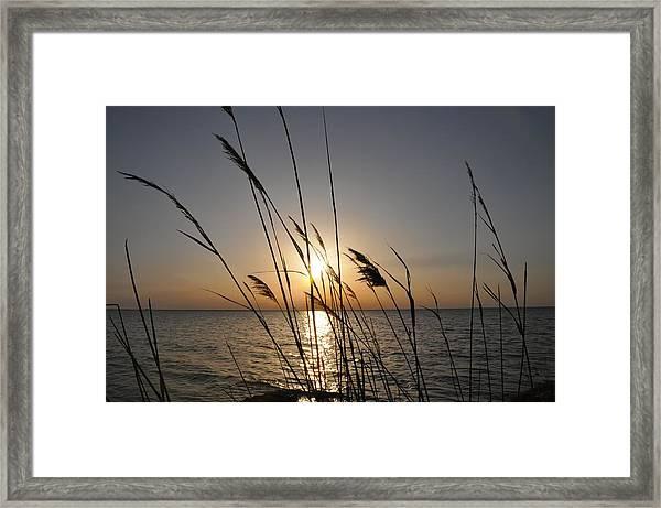 Tall Grass Sunset Framed Print