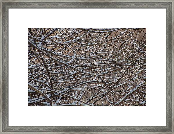 Framed Print featuring the photograph Tangled In The Snow by Beth Sawickie