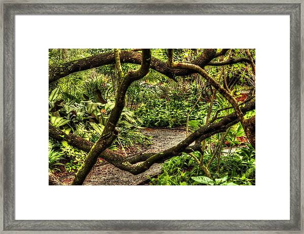 Tangled Path Framed Print