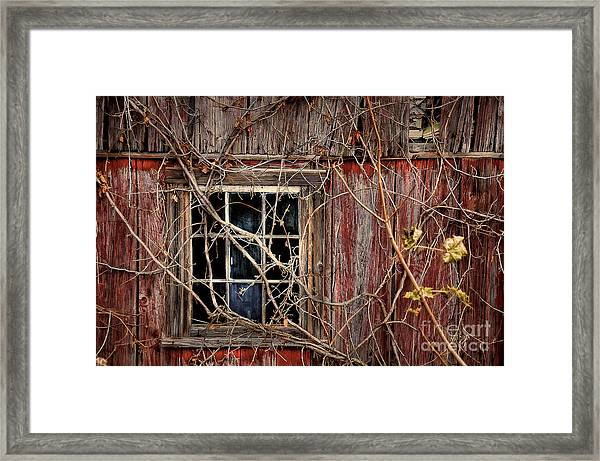Framed Print featuring the photograph Tangled Up In Time by Lois Bryan