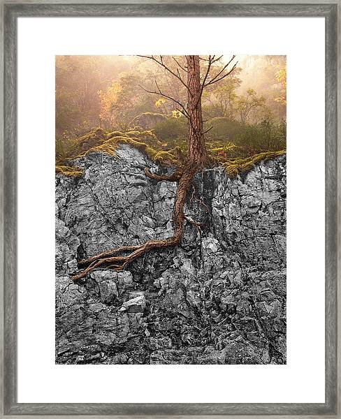 Taproot Framed Print