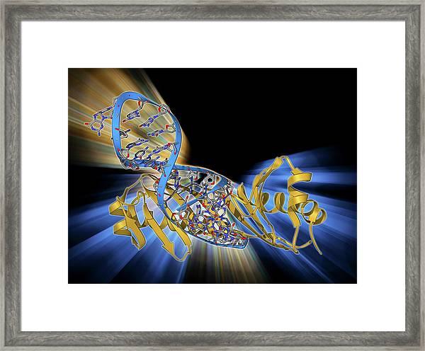 Tata Box-binding Protein And Dna Framed Print