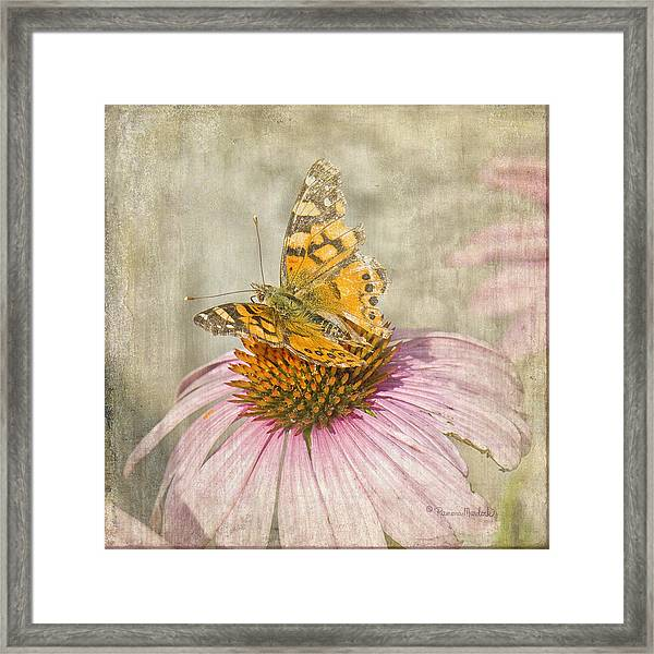 Tattered Butterfly Framed Print