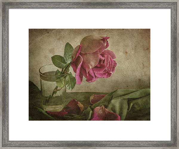 Tear Of Rose Framed Print by Igor Tokarev