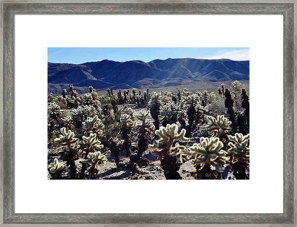 Teddy Bear Cholla Cactus Framed Print