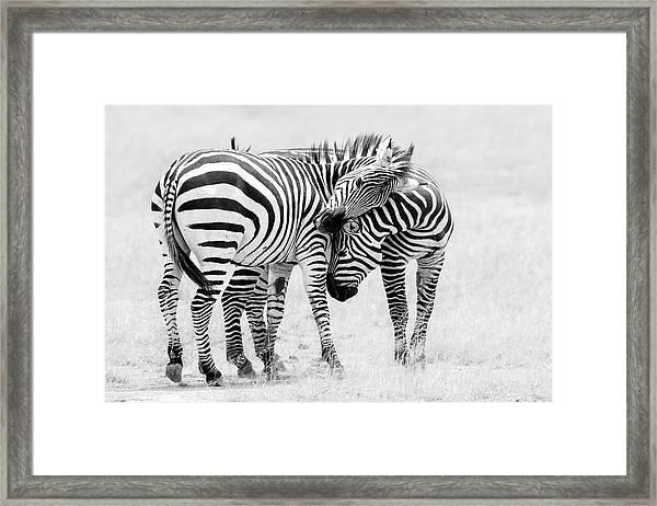 Tender Moment Framed Print