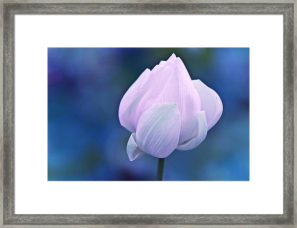 Tender Morning With Lotus Framed Print