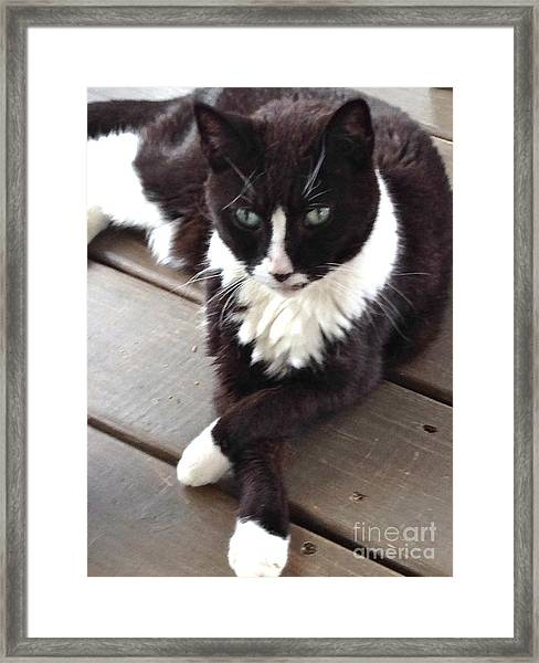 Tess The Temptress Framed Print
