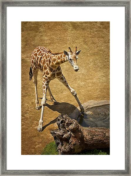 Testing The Water Framed Print
