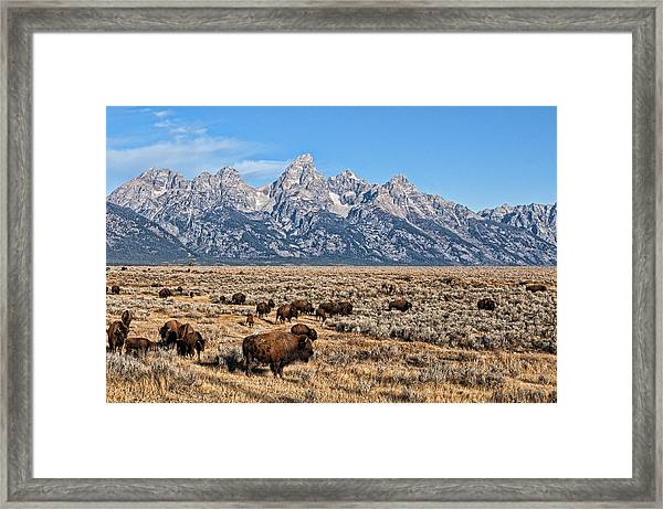 Framed Print featuring the photograph Teton Buffalo by David Armstrong