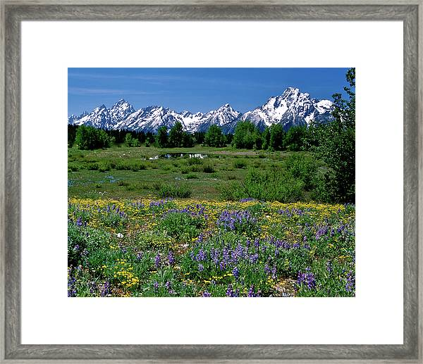 Teton Grandeur Framed Print