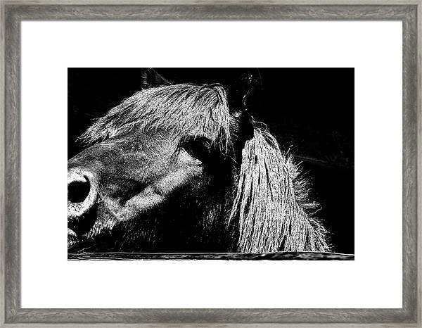 Teton Horse Framed Print