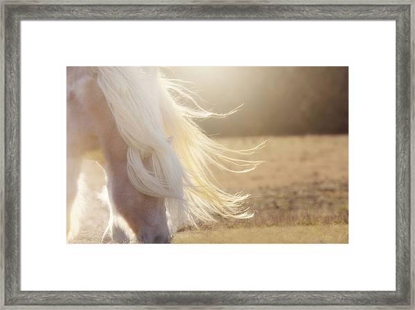 Texas Gold Framed Print