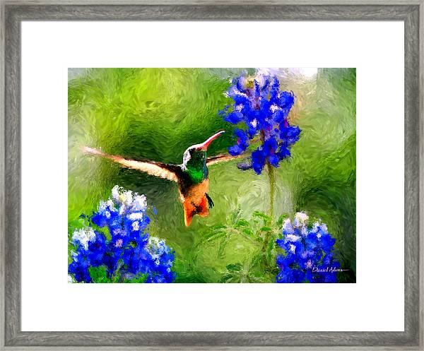 Da161 Texas Bluebonnet Hummingbird By Daniel Adams Framed Print