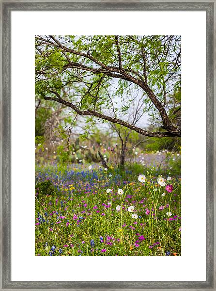 Texas Roadside Wildflowers 732 Framed Print