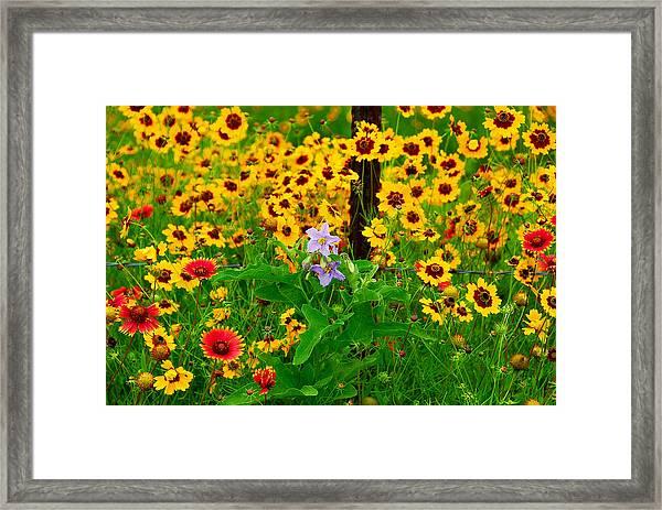 Texas Spring Delight Framed Print