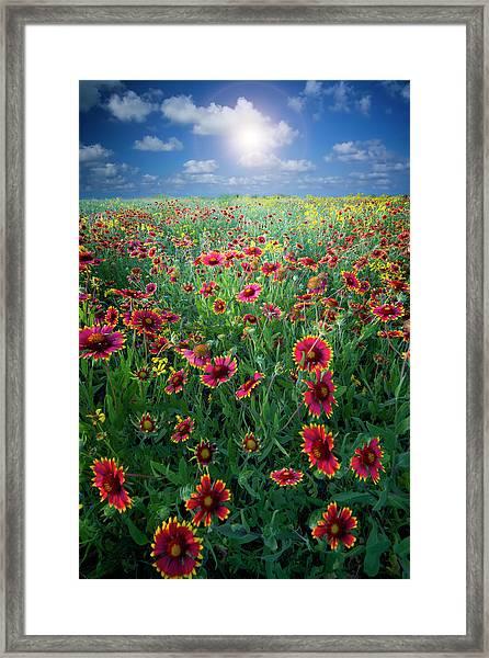 Texas Wildflowers Framed Print by Dean Fikar