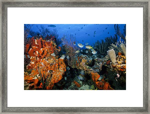 The Active Reef Framed Print