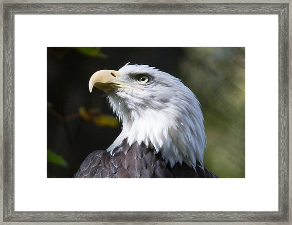 The Air Up There Framed Print