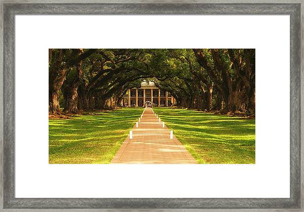 The Alley Of Oaks Framed Print