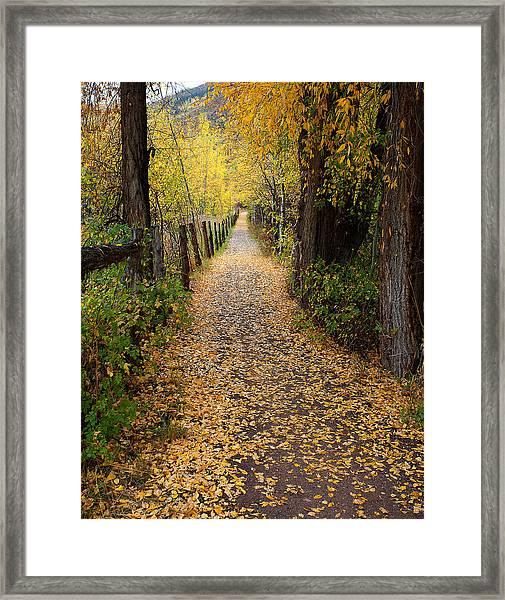 The Aspen Trail Framed Print