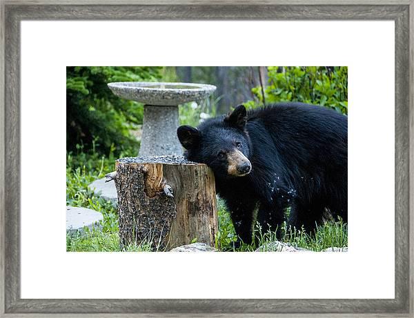 The Bear Cub With An Itch Framed Print