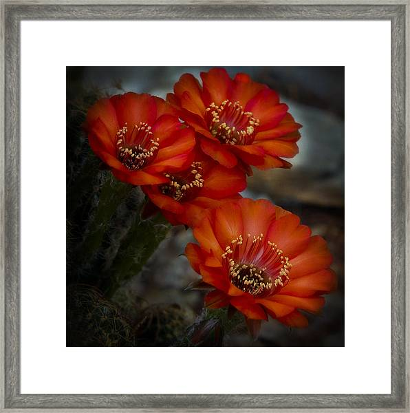 The Beauty Of Red Framed Print