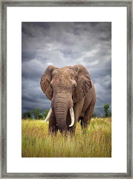 The Big Bull Framed Print