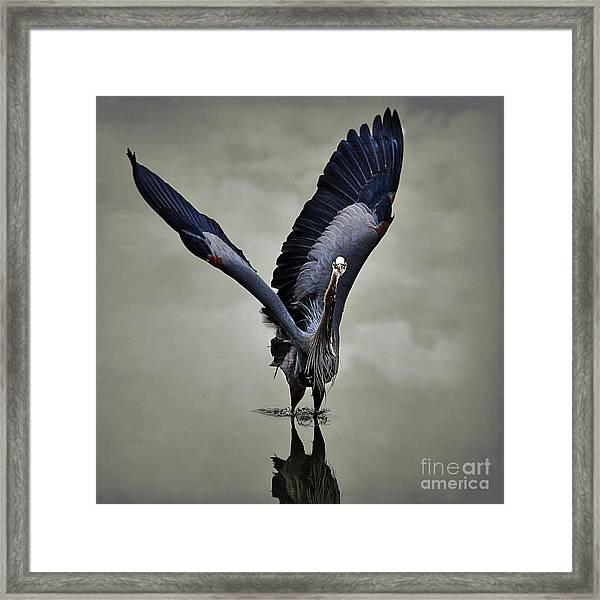 The Big Great Blue Heron Framed Print