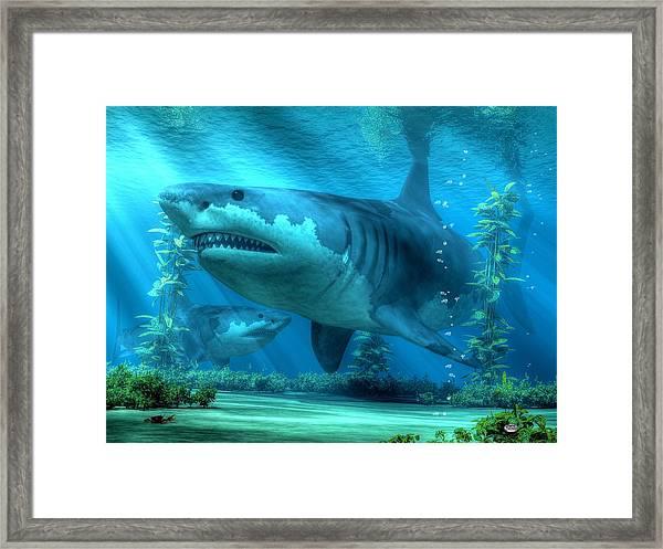 The Biggest Shark Framed Print