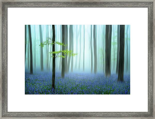 The Blue Forest ........ Framed Print