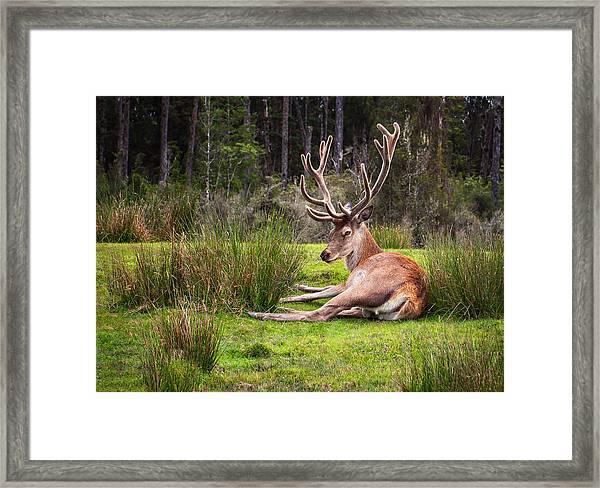The Buck Stops Here... Framed Print