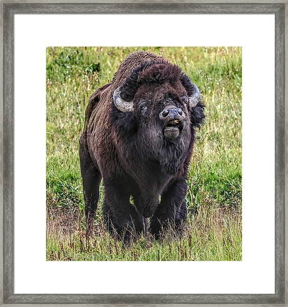 The Bull Framed Print