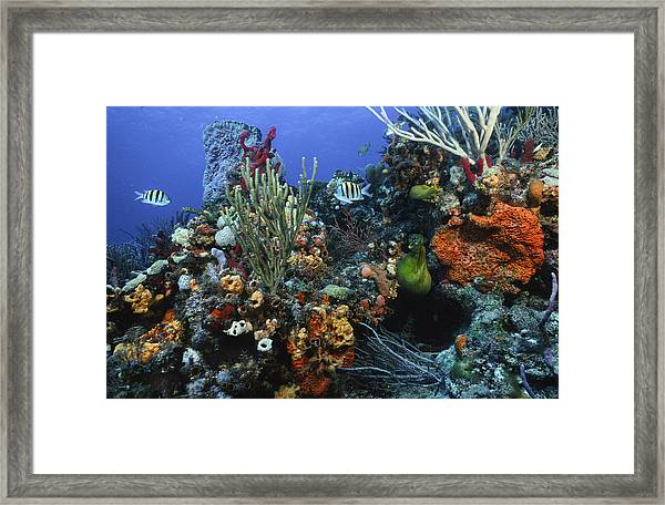 The Busy Reef Framed Print