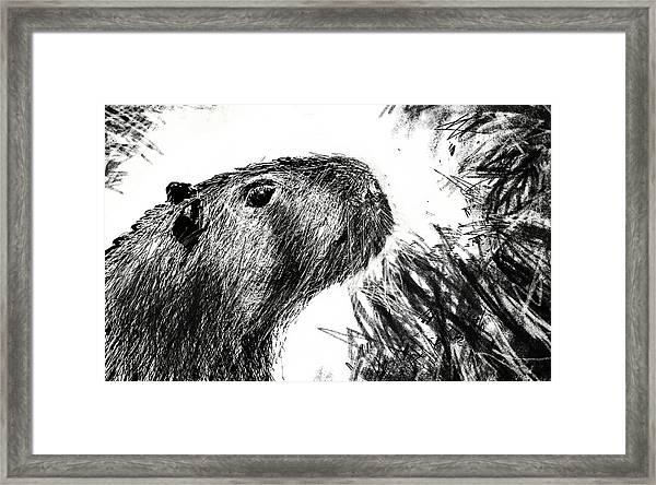 The Capybara  Framed Print