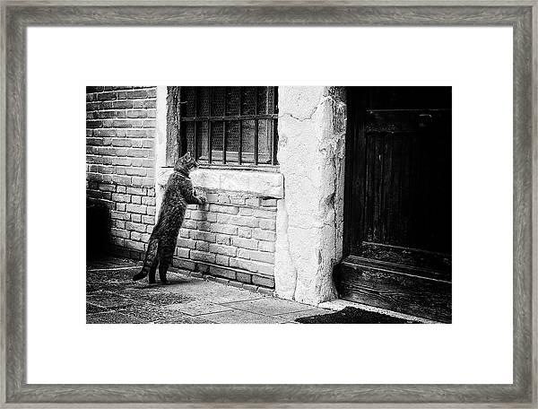 The Cat Framed Print by Izabella V?gh
