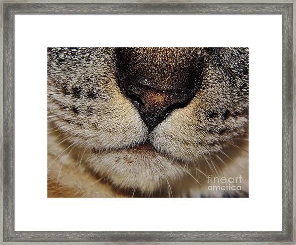 The - Cat - Nose Framed Print