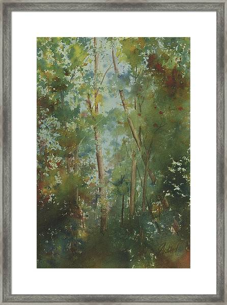 The Cathedral Pines Framed Print