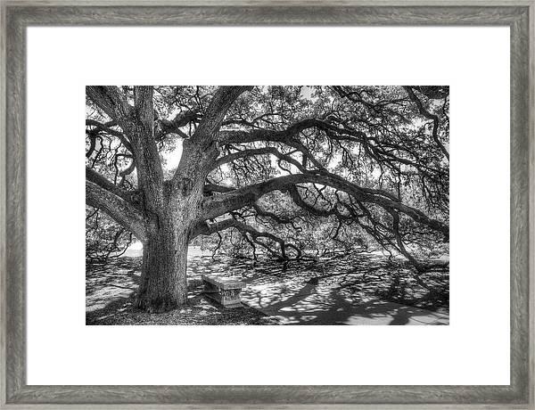 The Century Oak Framed Print