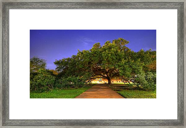 The Century Tree Framed Print