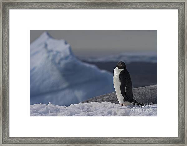 The Coldest Place On Earth... Framed Print