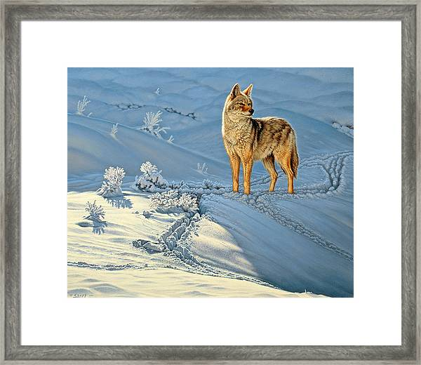 the Coyote - God's Dog Framed Print