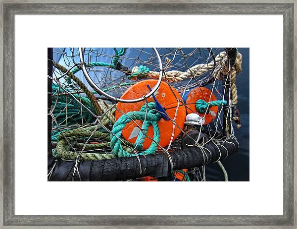Crab Ring Framed Print