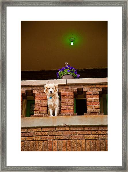 The Critic Framed Print
