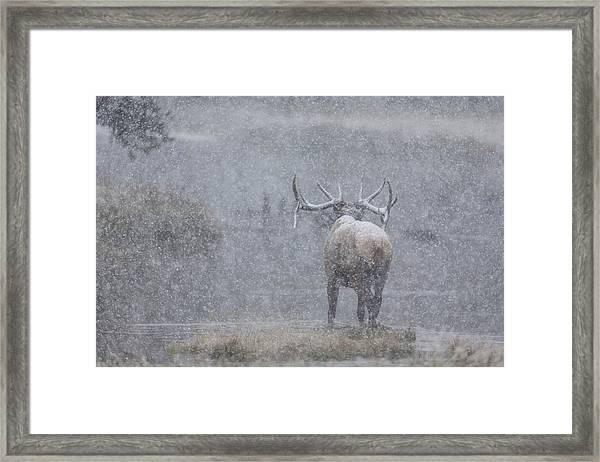 The Crossing Framed Print