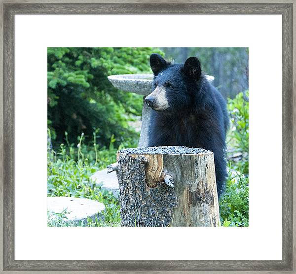 The Cub That Came For Lunch 2 Framed Print